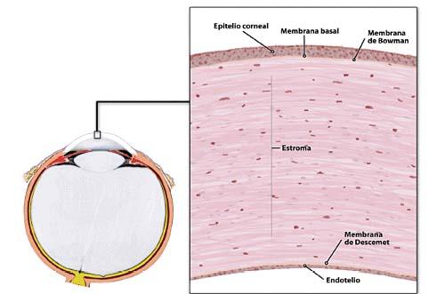f-cornea-distrofias-01.jpg